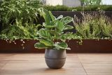 Canvas Maso Black Indoor Planter, 10-in | Canvas