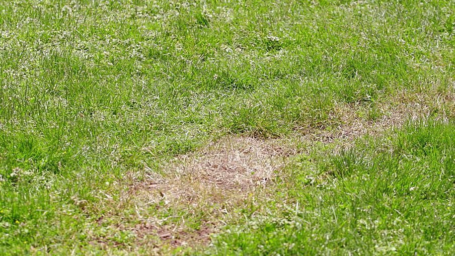 How to Aerate a Small Lawn