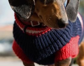 Dog Apparel & Accessories