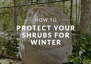 NT_HOWTO_Outdoor_winterizeShrubs_en