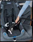 Bissell AutoPro Vacuum   Bissellnull