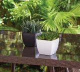 CANVAS Assorted Succulent Pot | CANVAS | Canadian Tire