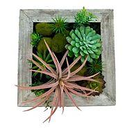 Plantes grasses CANVAS, table jardinière en bois, 12 po x 12 po