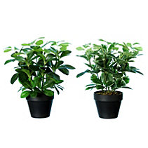 canadian tire trees and shrubs artificial plants canadian tire 11966