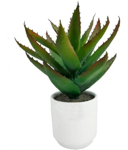 CANVAS Artificial Asparagus Plant in Ceramic Pot, 12.5-in Product image
