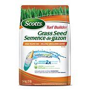 Bluegrass Seeds