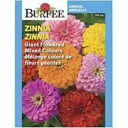Burpee Annual Flower Seed, Assorted