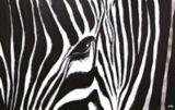 Renwil Kenyan Mare Canvas Wall Art, 48 x 30 x 1.5-in | Ren-wilnull