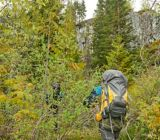 Woods™ Expedition Peak Backpack, 60-L | Woods | Canadian Tire