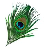 Crystal River Peacock Eye Feathers, Natural, 2-pk
