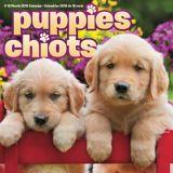 2018 Puppies Wall Calendar | Dateworksnull