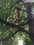 Nature's Way Bamboo Vertical Wave Bird Feeder | Nature's Waynull