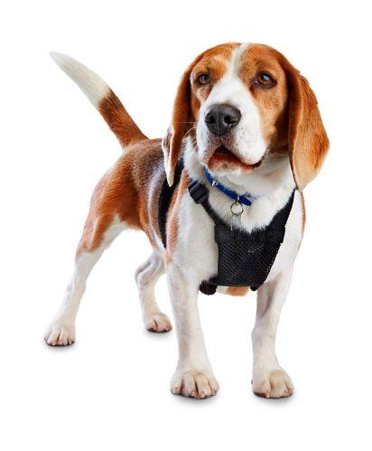 Petco No-Pull Dog Harness, Black, Medium