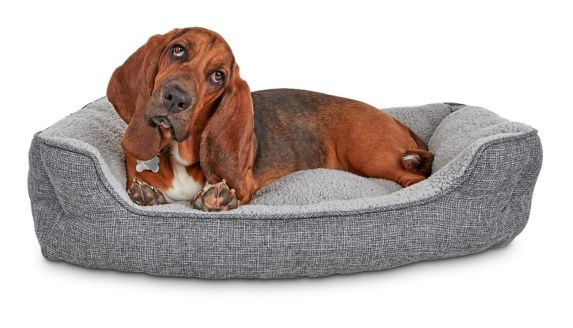 Petco Cozy Cottage Nester Dog Bed, Grey, 32-in x 24-in x 8-in Product image