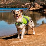 Petco Dog Flotation Vest, Yellow   PETCOnull