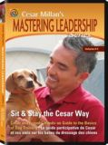 Cesar Millan Sit & Stay DVD | Cesar Millannull