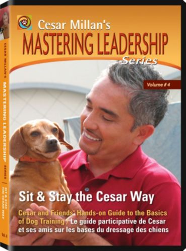 Cesar Millan Sit & Stay DVD Product image