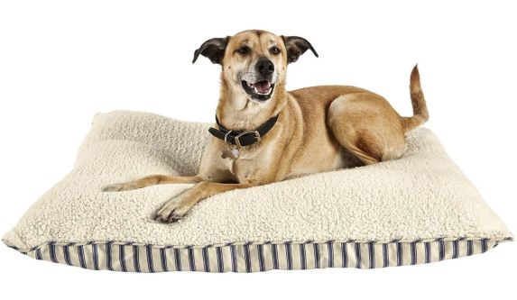 Petco Blue Striped Lounger Dog Bed, 40-in x 30-in
