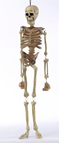 Natural Halloween Hanging Skeleton Product image