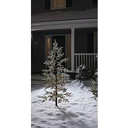 CANVAS Pre-Lit LED  Eastern White Pine Tree, 6-ft