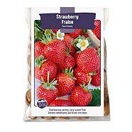 Bulbs Are Easy, Strawberries