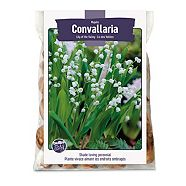 Lily of the Valley Bulbs For Planting