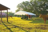 Auvent ShelterLogic à 14 montants, blanc, 18 x 40 pi | Shelter Logicnull