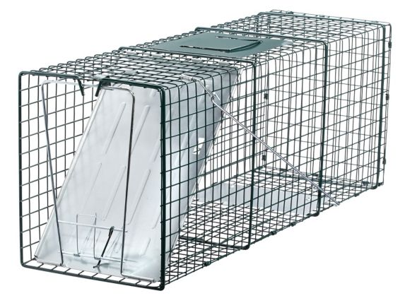 Live Catch Traps, 2-pk Product image