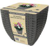 Bulbs Are Easy Pre-Planted Flower Bulb Kits, Stargazer   Bulbs Are Easynull