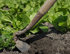 Cultivators, Hoes & Spades