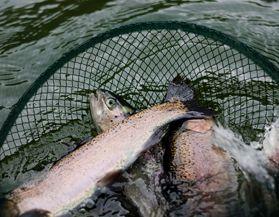 Filets à pêche