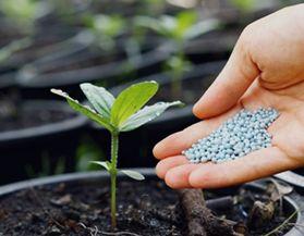 Engrais plantes et jardin