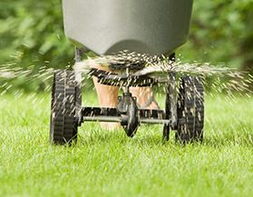 Shop All Lawn Overseeding