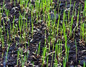 Grass Seed | Canadian Tire