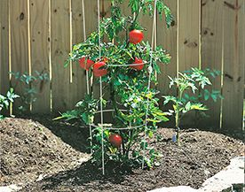 CAGES ET SUPPORTS POUR TOMATES