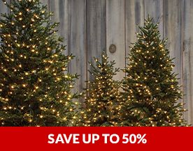 Christmas Trees Sale