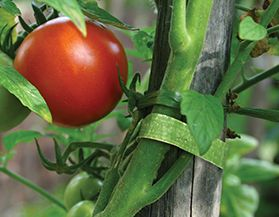 Velcro Plant Protection